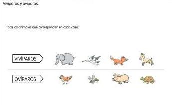 Animales oviparos y viviparos