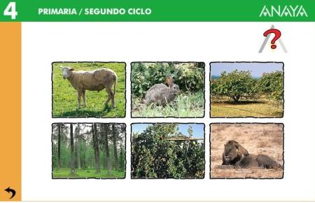 Cicle de l'aliment als ecosistemes